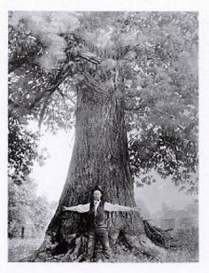 Pre-Blight Tree