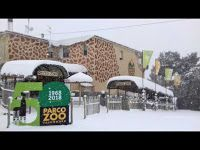 Caffè Letterari: Parco Zoo Falconara: animali in sicurezza dopo int...