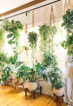 Fiddle leaf figs, pothos, snake plant or succulent: Whatever your green thumb prefers, there's no question that a houseplant adds a lively touch to interior style. Check out these ideas for working houseplants into your own home decor. Source by MoreIsNow Easy House Plants, House Plants Decor, Plant Decor, Cute Dorm Rooms, Cool Rooms, Hanging Plants, Indoor Plants, Hanging Succulents, Potted Plants