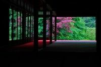 crimson foliage in Spring at Nanzenji Temple  #Kyoto #Japan