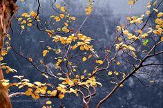 Yellow leaves by Akiatoshiaki