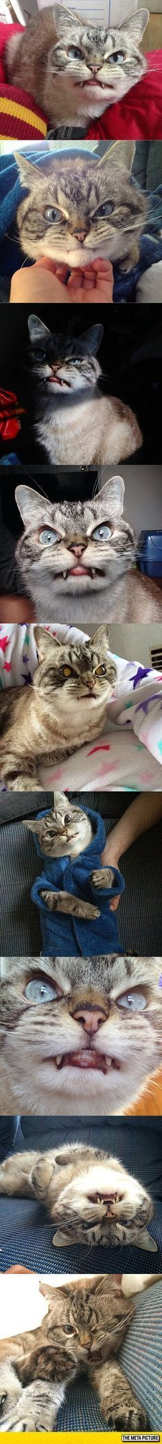 """""""Meet Loki, The Vampire Cat"""" I hope this doesn't affect him negatively. He looks…"""