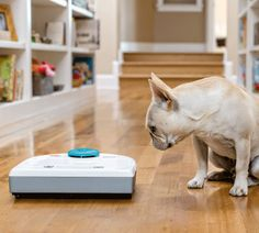 """Win a Neato Botvac™ 85 Robot Vacuum in our """"Best for Pets"""" Sweepstakes for BlogPaws"""
