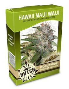 Hawaii x Maui Waui Cannabis Seeds, These are old school genetics and not too overpowering - inspiring and a smooth fruity herbal flavor.