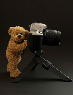 Teddy Bear Photographer Photograph - Teddy Bear Photographer Fine Art Print - Marilyn Savage