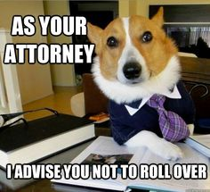 Lawyer Dog - He didn't go to law school but he still passed his state bark exam with flying colors.