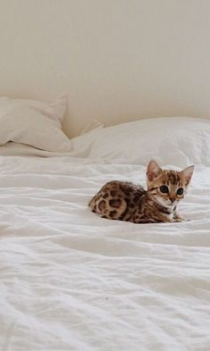 Tiny cat - big bed...