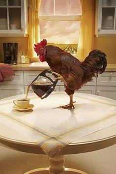Rooster Breakfast