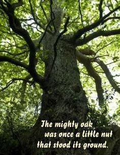 80 Best Acorns & Oak Trees images in 2020 | Oak tree, Acorn and ...