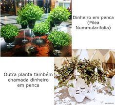 O #Dinheiroempenca é outra #planta fácil de cuidar. Veja como no #simplesdecoracao
