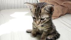 Come aiutare un gattino timido