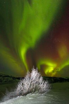 ☆ Northern Lights in Abisko.。Sweden :→: Photographer Silvia y Juan Siju ☆