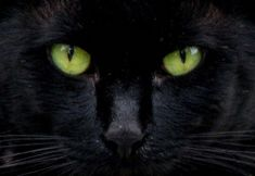 """The first witch has a companion spirit, in the form of a black cat. """"I come, Graymalkin"""" Graymalkin being the name of this guardian spirit. A black cat represents a symbol for evil, foreshadowing foul acts that are yet to come. People With Green Eyes, Jade Eyes, Black Cat Tattoos, Eye Tattoos, Tattoo Cat, Green Eyed Monster, Cat Colors, Cat Sitting, Funny Animal Pictures"""