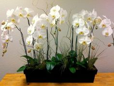 La orquídea mariposa es la más bella (imágenes que lo demuestran)