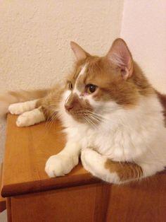 Taka by StarsAngel | 猫ネコCAT&花etc