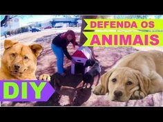 COMO FAZER CASINHA PARA CÃES ABANDONADOS - PROTEJA OS ANIMAIS