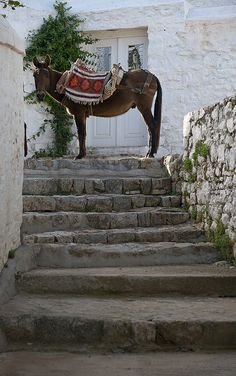 Ydra, Greece  - burritos pra ajudar os turista a subir a ilha... tambem existem em santorini
