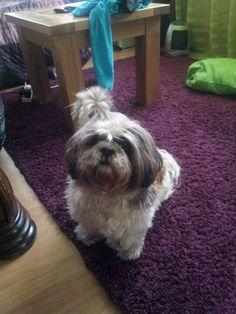 Meggie Pets, Animals, Animals And Pets, Animales, Animaux, Animal, Animais