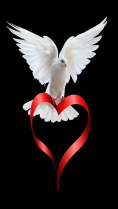 Red heart ♥ God sent his love through Jesus by the Holy Spirit. I Love Heart, Peace And Love, My Love, Perfect Peace, Tattoo Oma, Saint Esprit, White Doves, Jesus Loves You, Native American Indians