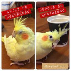 Piteca , mascote  da Capim Limão e Restaurante Vim de Minas,Rj