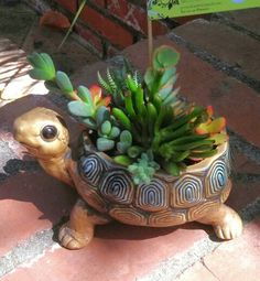 Potted Earth Succulent Arrangements ~ by Robin Mathews Turtle SOLD