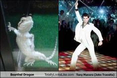 Bearded dragon & John Travolta lookalikes