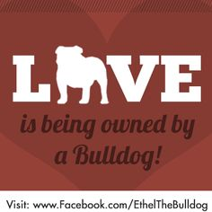 So true! To us the dogs is a part of our family but to them they have new members of a pack! Old English Bulldog, French Bulldog, Dog Love, Puppy Love, Bulldog Quotes, Bullen, Family Dogs, In This World, Best Dogs