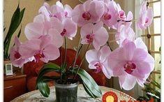 Mojej orchidei sa už mesiace nedarilo a chcela som ju vyhodiť: Potom som ju namiesto substrátu položila do tohto a o týždeň nahodila puky, je to ako zázrak!