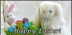 funny easter memes for adults Happy Easter Meme, Funny Easter Memes, Easter Festival, Easter Specials, Easter Banner, Easter Traditions, Meme Pictures, Funny Happy, Cute Bunny