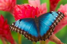 nice 30+ Beautiful Blue Butterfly Photography