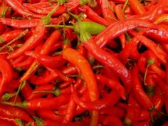 Cayenne Pepper In The Garden – Tips For Growing Cayenne Peppers