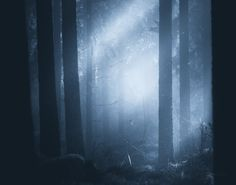 "opticcultvre: ""  Ethereal Silence by Joni Niemelä """