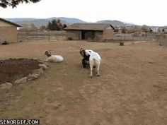Die 30 größten Arschlöcher des Tierreichs