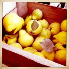 """Quince's apple-like qualities make it a favorite for jellies like marmalade, which originally meant """"Quince Jam"""" (in Portuguese quince is """"marmelo""""). Quince Fruit, Marmalade, Gluten Free Recipes, Free Food, Jelly, Pear, Healthy Living, Apple, Color Pop"""