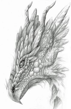 Healthy breakfast ideas for kids age 9 to make 3 12 11 Fantasy Drawings, Fantasy Kunst, Pencil Art Drawings, Drawing Sketches, Cool Drawings, Fantasy Art, Wings Sketch, Dragon Artwork, Dragon Head Drawing