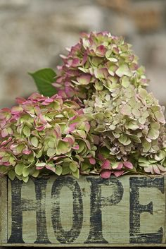 Hydrangea Hamburg in all its Vintage glory! Modern Country Style: The Top Ten Best Green Hydrangeas For A Modern Country Garden Click through for details. Hortensia Hydrangea, Green Hydrangea, Hydrangea Macrophylla, Hydrangea Garden, Modern Country Style, Country Life, Deco Floral, Pink And Green, Green And Brown