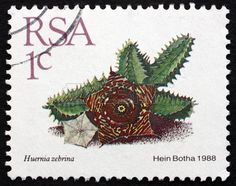 Huernia Zebrina, Succulent Plant, stamp printed in South Africa circa 1988