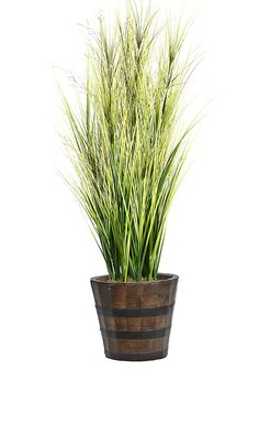 Laura Ashley VHX114216 Onion Grass with Twigs Planter, 68' >>> You can get additional details at the image link.