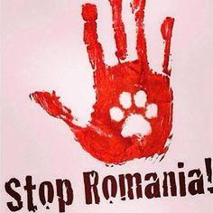 STOP ROMANIA!!!!!