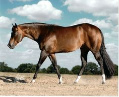RIP    Zips Chocolate Chip   died at age 30---one of the greatest pleasure horse sire ever!!!!  He will be missed.