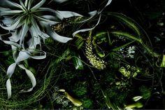 Encyclopedia of Flowers | Makoto Azuma