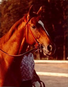 (1975-2001) Affirmed, the eleventh and most recent winner of the Triple Crown. Affirmed was also known for his famous rivalry with Alydar, whom he met ten times, including in all three Triple Crown races and where Alydar became the first racehorse to finish second in the Kentucky Derby, Preakness Stakes, and Belmont Stakes.
