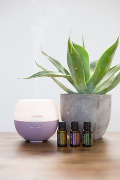 Need a calming diffuser blend? Here's one! 4 drops Marjoram, 5 drops Lavender, and 3 drops Rosemary.
