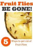 So Annoying! Is there anything more annoying that fruit flies in the house?  We start getting them around August and they hang around until the temps drop in late October!  I have my own non-toxic tried...