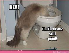 funny cat | funny cat lol