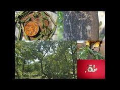 Medicinal Rice P5J Formulations for Psophocarpus Excess: Pankaj Oudhias...