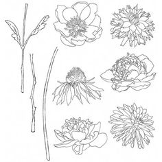 These cling mounted rubber stamps feature the bold visual artistry of Tim Holtz. This package includes nine rubber stamps (three stems and six different types Tim Holtz Stamps, Digi Stamps, Stamp Storage, Different Types Of Flowers, How To Make Stencils, Stampers Anonymous, Flower Doodles, Flower Stamp, Penny Black