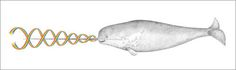 Rainbow Narwhal Spirit Animal by kozyndan - Gallery Nucleus