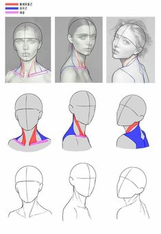 Drawing body proportions anatomy sketch 37 ideas for 2019 - - Drawings body Drawing body proportions anatomy sketch 37 ideas for 2019 Anatomy Sketches, Anatomy Art, Drawing Sketches, Art Drawings, Drawing Drawing, Human Anatomy Drawing, Pencil Drawings, How To Draw Anatomy, Neck Drawing