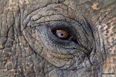 Vous pouvez soutenir les éléphants du monde en n'achetant pas d'ivoire, en boycottant les organisations et entreprises qui abusent et exploitent les éléphants. Ce magnifique éléphant a été secouru par Wildlife SOS et vit dans la sécurité de leur sanctuaire à Agra, en Inde.